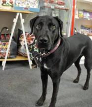 Ester, Shop Dog
